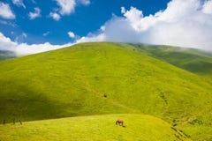 Cheval dans la montagne Image libre de droits
