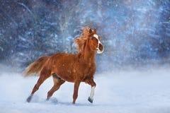 Cheval dans la neige images stock