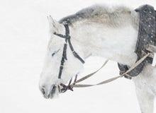 Cheval dans la neige Photos stock