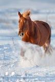Cheval dans la neige image libre de droits