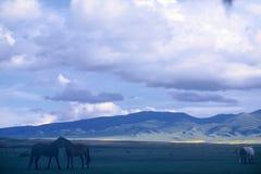Cheval dans la prairie images stock