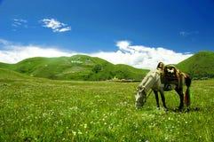 Cheval dans la prairie de Tagong Photo stock