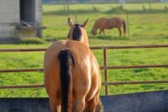 Cheval dans la stalle verrouillée Photo libre de droits