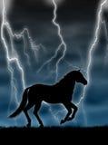 Cheval dans la tempête Images libres de droits