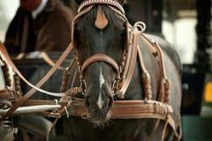 Cheval dans le chariot images stock