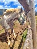 Cheval dans le corral photos stock