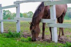 Cheval, cheval dans le corral photographie stock