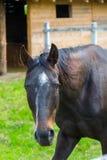 Cheval, cheval dans le corral images libres de droits