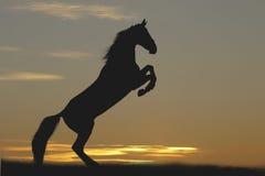 Cheval dans le coucher du soleil Image stock