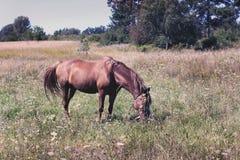 Cheval dans le domaine Un beau cheval photographie stock