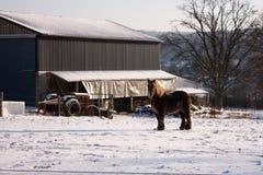 Cheval dans le pré neigeux Photographie stock libre de droits