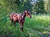 Cheval dans les bois Photo stock