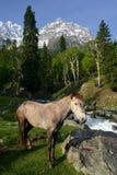Cheval dans les montagnes photo stock