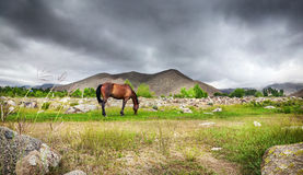 Cheval dans les montagnes Photographie stock libre de droits