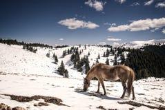 Cheval dans les montagnes image libre de droits