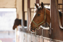 Cheval dans une stalle image stock