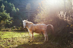 Cheval dans Yunnan lisez le lac Image libre de droits