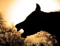Cheval de baîllement silhouetté contre le Soleil Levant Image stock