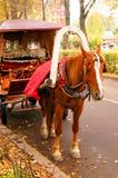 Cheval de baie armé à un chariot sur la route Photos libres de droits