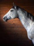 Cheval de baie de race dans la porte stable Images stock