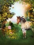 Cheval de beauté Photo stock