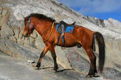 Cheval de Bromo Image libre de droits