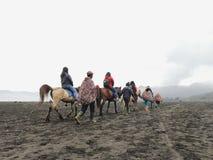 Cheval de Bromo Photos libres de droits