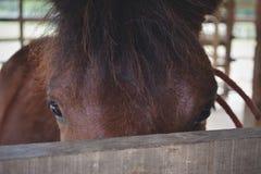Cheval de Brown dans l'écurie en bois une ferme d'animaux photo libre de droits