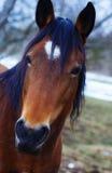 Cheval de Brown dans la terre d'hiver sur la paille Images stock