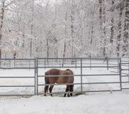 Cheval de Brown dans un monde blanc Photos libres de droits