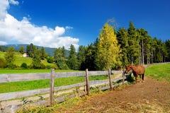 Cheval de Brown frôlant sur de beaux pâturages dans les Alpes italiens Photographie stock