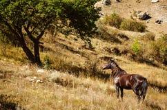 Cheval de Brown se tenant à côté d'un arbre vert Images libres de droits