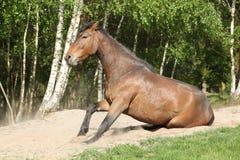 Cheval de Brown se tenant après roulement dans le sable en été chaud photographie stock