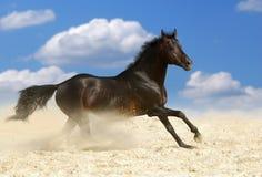 Cheval de brun foncé Photographie stock libre de droits