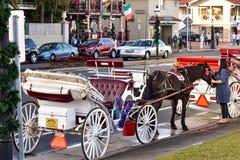 Cheval de caresse de femme Visite de tour de chariot à la vieille ville dans la côte historique de la Floride photographie stock libre de droits