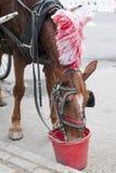 Cheval de chariot Photo stock