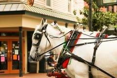 Cheval de chariot décoré Photo stock