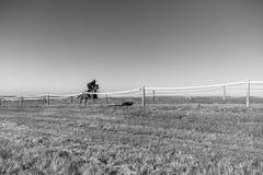 Cheval de course Rider Running Training Track photographie stock libre de droits