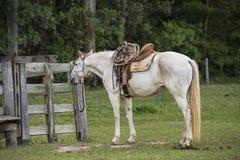 Cheval de cowboy prêt pour le travail photographie stock libre de droits