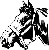 Cheval de ferme en nature Image libre de droits