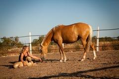 Cheval de formation de jeune femme dehors en été Photos libres de droits