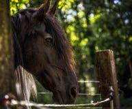 Cheval de Frisian photos libres de droits