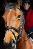 Cheval de Holsteiner Images libres de droits