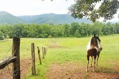 Cheval de montagne Photos libres de droits