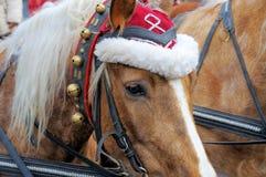 Cheval de Noël Image libre de droits