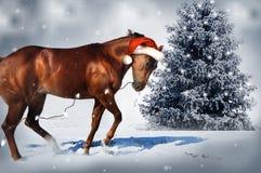 Cheval de Noël Photographie stock libre de droits