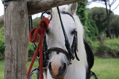 Cheval de parc de San Rossore images stock