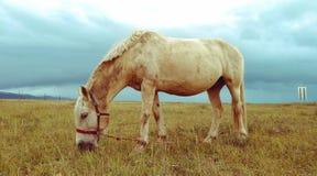 Cheval de prairie photos stock