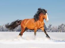 Cheval de Russe de traite Photographie stock libre de droits