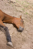 Cheval de sommeil Photos libres de droits